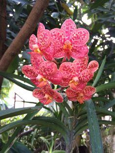#orchid #flower #garden