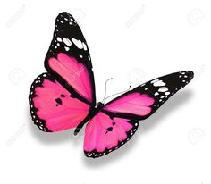 Pink Butterfly Stock Photos Images, Royalty Free Pink Butterfly ...