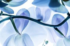 Close up of orchid flower, 42-53084451, Fotochannels