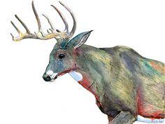 animal-watercolor-pencil-paintings-janie-stapleton-7