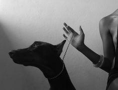 Doberman Pincher at the ready. Black Doberman, Doberman Love, Black And White Aesthetic, Doberman Pinscher, Bad Girl Aesthetic, Wallpaper Iphone Cute, Cute Animals, Puppies, Photography