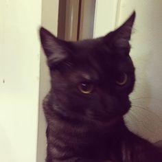Let.me.in. #catsofinstagram