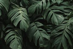 One of many great free stock photos from Pexels. This photo is about plant, texture, tropical Macbook Wallpaper, Wallpaper Pc, Nature Wallpaper, Wallpaper Backgrounds, Leaves Wallpaper, Vintage Desktop Wallpapers, 4k Wallpapers For Pc, Laptop Backgrounds, Backgrounds Free