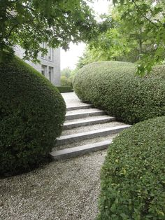 What is a Modern Garden? Garden Hedges, Topiary Garden, Garden Steps, Terrace Garden, Garden Pool, Garden Paths, Cheap Landscaping Ideas, Backyard Landscaping, Formal Gardens