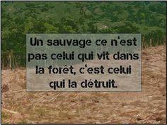 Définition d'un sauvage aujourd'hui, citation, citation forêt, citation sauvage,