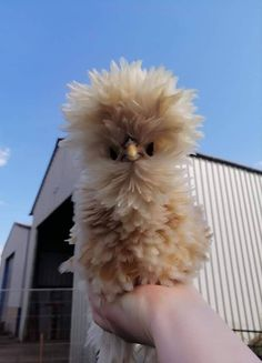 Post with 1714 votes and 74008 views. Tagged with aww, animals, birthday, dump, ijustmetyouandiloveyou; It's my Birthday have Mini of Dump Cute Animals. Fancy Chickens, Pet Chickens, Raising Chickens, Chickens Backyard, Bantam Chickens, Fluffy Animals, Cute Baby Animals, Farm Animals, Animals And Pets