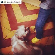 Antonella fue a @daable_tienda e hizo piruetas de felicidad cuando vio su paleta de Chacha y El Galgo!  #PerroFeliz #chachayelgalgo #pasteleriacanina #paletasparaperros #amorperruno #mascotas #peluditos #alimentacioncanina #petfriendlycali #tortasparaperros #cumpleañosperruno #cumpleañosparaperros #YoCreoEnCali #cali #calico #colombia #shihtzu #shitzu #shihtzusofinstagram  #Repost @daable_tienda