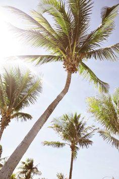 Palmbomen doen mijn verlangen naar een zomervakantie in een warm en zonnig land. Ultimate relaxation.