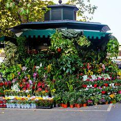Özel günleriniz için güzel çiçekçiler de ustasiburada.com'da.
