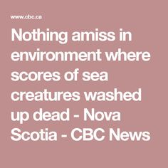 Nothing amiss in environment where scores of sea creatures washed up dead - Nova Scotia - CBC News