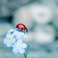 Being the only differing object, the lady bug becomes the center of focus. Beautiful Bugs, Amazing Nature, Animal Photography, Nature Photography, Butterfly Template, Photo Heart, Pictures To Paint, Beautiful Creatures, Pet Birds