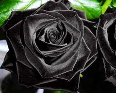 Black roses image via Colorfull at www.Facebook.com/colorfullss