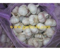 Normal White Garlic (purple garlic/red garlic) The garlic skin have a little purple or red Purple Garlic, Chinese Garlic, How To Store Garlic, Fresh Garlic, China, Red, Porcelain