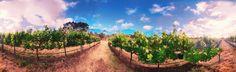 Inpossible vineyard, McLaren Vale, South Australia