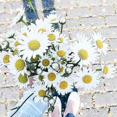 """Eine Runde Blumen für euch... Einfach so... Weil heute ein toller  Tag ist... Ein richtig toller sogar! So toll dass @dailydreamery und ich ihn zum offiziellen """"Filiztag"""" gekürt haben  Wieso weshalb warum erzähle ich euch morgen im aller Ruhe  Habt einen fabelhaften Abend ihr Lieben   #alittlefashion #lifestyle #blogazine #happygirl #luckygirl #weekend #tgif #fb"""
