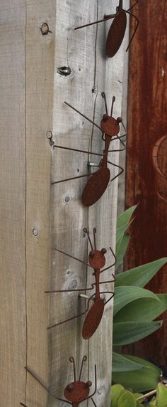 Decorative rusting steel bullants climb the hardwood pergola post. Steven Wells garden at Royal Talbot Rehabilitation Hospital, Melbourne