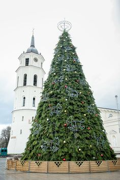 Vilnius (Lithuania) Cathedral Christmas tree 2013