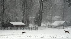 """""""Heavy Snow in Hanover"""" (Studley Road in Hanover County), Parks Rountrey Virginia, Donate Now, Photo Contest, Snow, Gallery, Parks, Outdoor, Outdoors, Photography Challenge"""