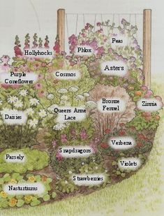 Butterfly Garden Plans 2019 Bring beautiful butterflies to your home with these easy to do butterfly plans.With listed plants that a butterfly will love. The post Butterfly Garden Plans 2019 appeared first on Flowers Decor. Flower Yellow, Cut Flower Garden, Cut Garden, Butterfly Garden Plants, Flower Garden Plans, Flower Garden Design, English Flower Garden, English Garden Design, A Butterfly