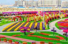 Em Dubai, não faltam opções para fazer passeios diferentes. Uma das atrações turísticas ousadas é o Al Ain Paradise, parque mais florido do mundo. Confira!
