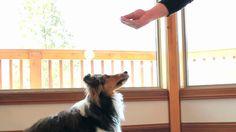 Commandement Assis -  Apprendre à son chien à s'assoir - Éducation de chien