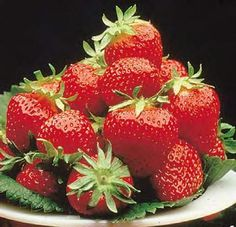 Early Season Strawberries - 5 Strawberry Plants £4.25