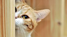 Cat Playing Hide and Seek / High Quality Wallpaper Images 1080p / HD Pictures / Tablet Mobile PC