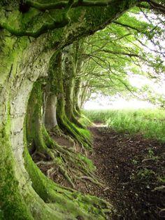Curragh of Kildare, Ireland (by pingwynne)