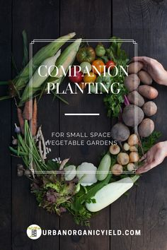 Companion planting is an agricultural technique where you plant other kind of plants that help each other out. In other words with companion planting the more you plant the better! Planting Vegetables, Healthy Vegetables, Growing Vegetables, Vegetable Gardening, Gardening For Beginners, Gardening Tips, Raised Garden Beds, Raised Bed, Gardens