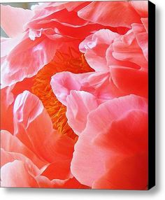 Peony Petals Stretched Canvas Print / Canvas Art By Stephanie Callsen