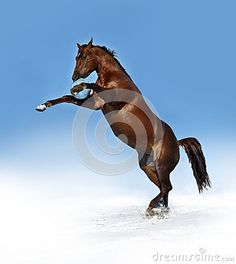 Photo about Horse rearing and playing with a ball in the snow. Image of snow, rearing, playing - 61570206 Horse Rearing, Snow Images, Christmas Cards, Horses, Stock Photos, Animals, Christmas E Cards, Animales, Animaux