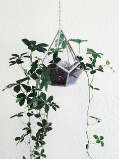 minimalist terrarium - Google Search