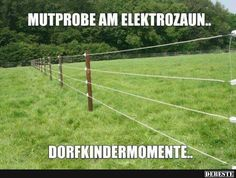Mutprobe am Elektrozaun..