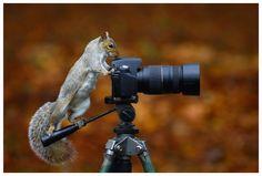 animal-photographer-wcth03-640x432