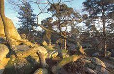 Gilles Adnot. vue de la forêt de Fontainebleau