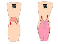 筒状を意識して描くのがコツ! 脚・足の描き方講座 イラストの描き方 脚を描くときにチェックしたい筋肉 3/4 How to draw Legs and Feet   Illustration tutorial Leg muscle structure 3/4