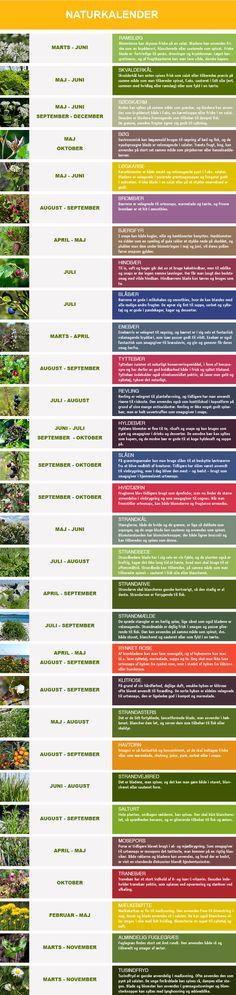 Naturkalender_2013