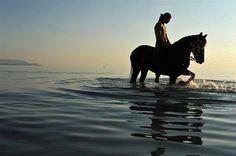 Pferdehof Morgenstern auf Sardinien: Wer die Ruhe in der Natur und die Stille liebt, und wer Kontakt zu Tieren sucht, der wird sich bei uns sehr wohl fühlen...Die umliegenden Berge des  Monte Nieddu-Massivs laden zum Wandern ein und die Nähe zum Meer ist für einen Badeurlaub auch  sehr interessant...Freut euch darauf, das 'Tal des Lerno' kennenzulernen!