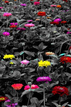 Color Splash.