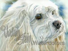 CAVACHON+Cavalier+Bichon+Pet+Portrait+Watercolor+Print+by+k9stein,+$22.50