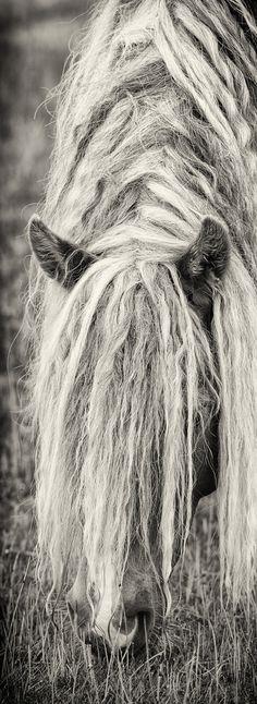 2013 ‹ Sable Island Horses by Robert Dutesco