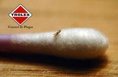 ¡Cómo eliminar definitivamente  a los piojos de su hogar!  Cuando hay una infestación de piojos, a veces sólo se controla la plaga en usted o miembros de su familia, pero además de eso es necesario realizar también una limpieza profunda de su casa para eliminar completamente a estos insectos.