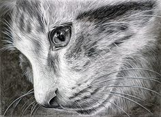 """Those Eyes"" Realistic Charcoal Drawing of Cat"