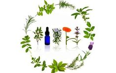 Essential oils are used extensively in aromatherapy and various traditional medicinal systems. It is used in the treatment of a variety of diseases.