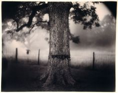 sally mann. scarred tree from the deep south series 1998