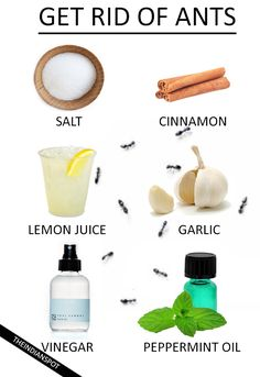 If ants have been bothering you for quite a while now, and nothing seems to keep them at bay, you could consider trying out some of the best-known natural remedies to keep these tiny (yet [...]