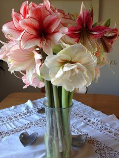 How to Make Amaryllis Bulbs Rebloom – Easy To Grow Bulbs Large Flowers, Cut Flowers, Easy To Grow Bulbs, Rose Garden Design, Household Plants, Amaryllis Bulbs, Garden Bulbs, Orchid Care, Plant Care