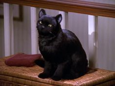 "Elvis, Witch, and Warlock were the three cats who played the part of Salem throughout the series. | 19 Surprising Facts About ""Sabrina, The Teenage Witch"" We Bet You Never Knew"