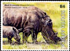 Black Rhinoceros (Diceros bicornis) 2014
