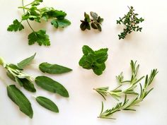 Discover which 5 herbs every garden should have - on Craftsy!